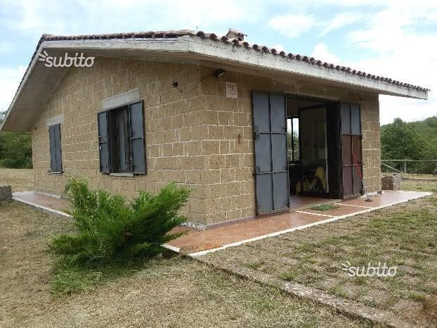 Roccamonfina terreno castagneto+cottage