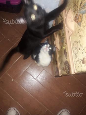 Gatti regalo