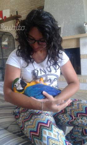 Ara ararauna pappagallo