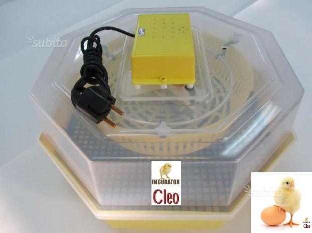 Incubatrice Cleo 5