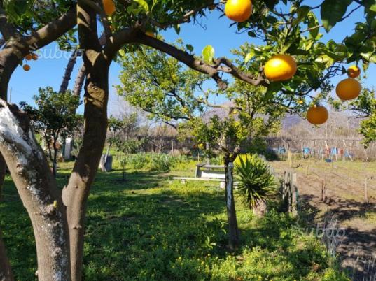Terreno con alberi da frutta