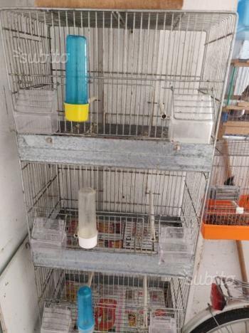 Canarini cardellini gabbie pappagalli