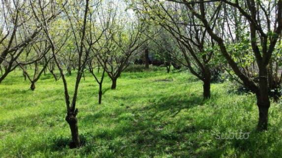 Terreno agricolo pianeggiante