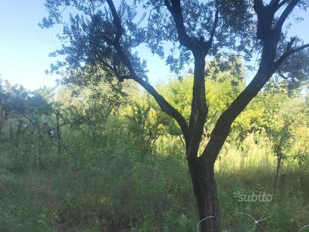 Terreno nei pressi del Parco Imperiale