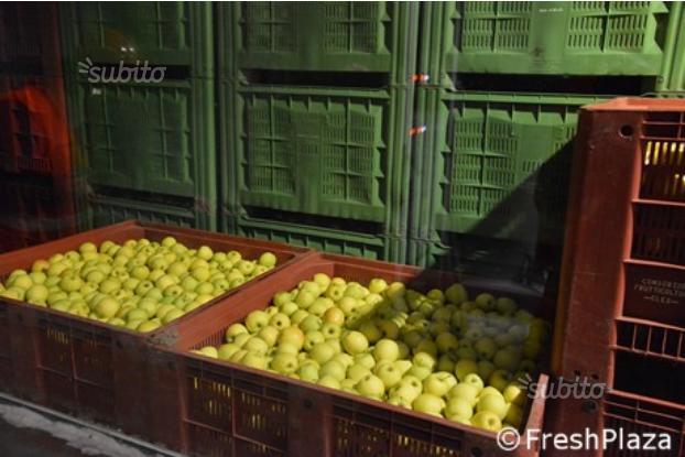 Cella frigo frigorifero per frutta e bins cassoni