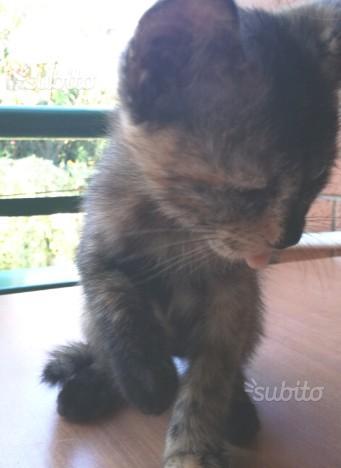 Regalo gattina multicolor