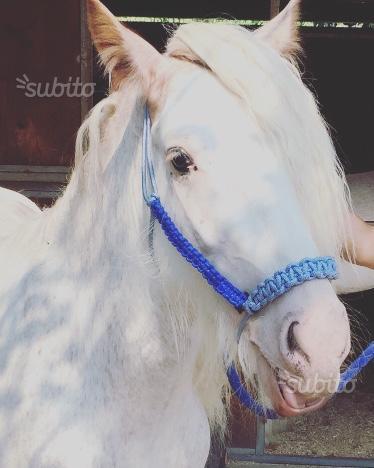 Capezze per cavalli personalizzate