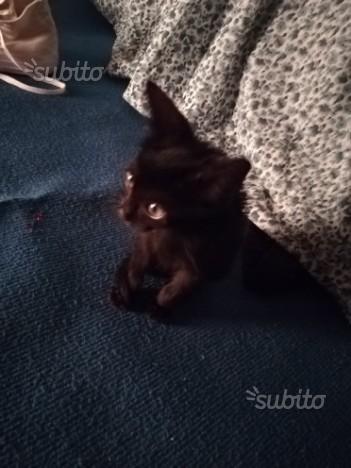 gattina di 2mesi e mezzo