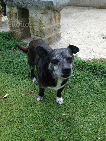 RUFUS cagnolino 9 kg 4 anni