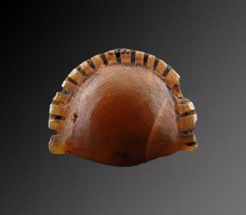 Egyptian crystal Cowrie shell amulet