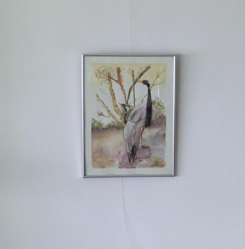 aquarel Kraanvogels