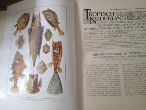 Tropisch Nederland tijdschrift 1930 1931 vele illustraties