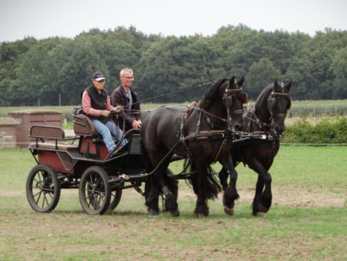 2 span friese paarden + toebehoren