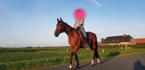 braaf recreatie paard