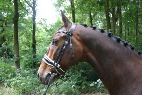 verschillende paarden te koop
