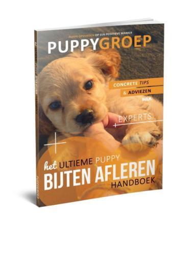 Stapsgewijze Handleiding voor het Opvoeden van je Puppy