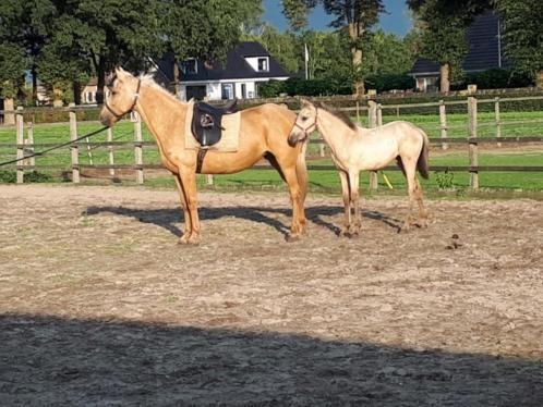 Grote E klein paard merrie