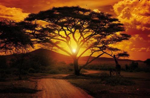 Fotobehang AFRICA SUNSET Gratis Lijm en Verzenden 1055