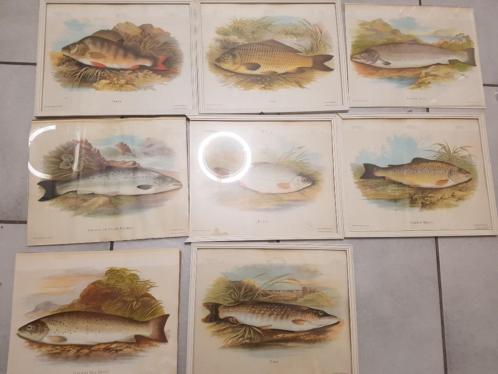 Oude prints hengelsport vissen